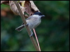 Click here to enter Willow Tit photo gallery