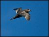Click here to enter Providence Petrel photo gallery