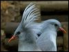 Click here to enter gallery and see photos of: Kagu